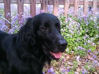 春の花紫.JPG