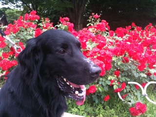 春の花赤.JPG