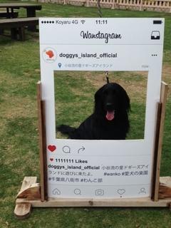 dogstagram.JPG