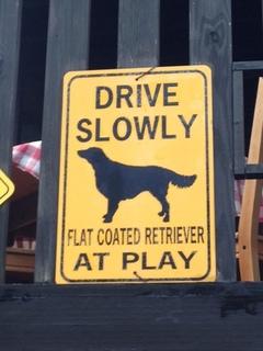 flat at play.JPG